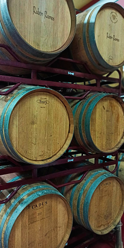 Oak barrels Wines Rubén Ramos